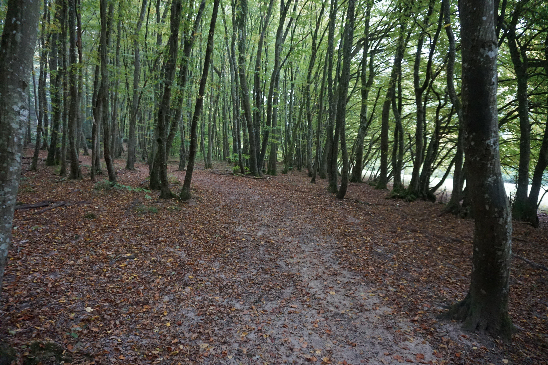 Árvores no Trilho de Mullerthal, no Luxemburgo