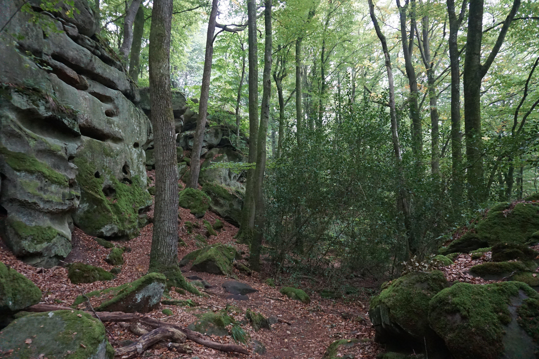 Árvores e rochas no Trilho de Mullerthal, no Luxemburgo