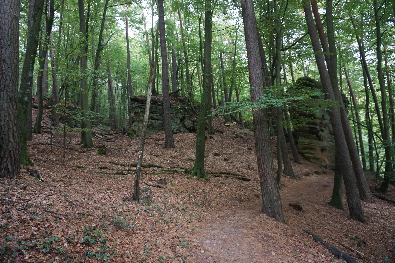 Árvores e caminho no Trilho de Mullerthal, no Luxemburgo