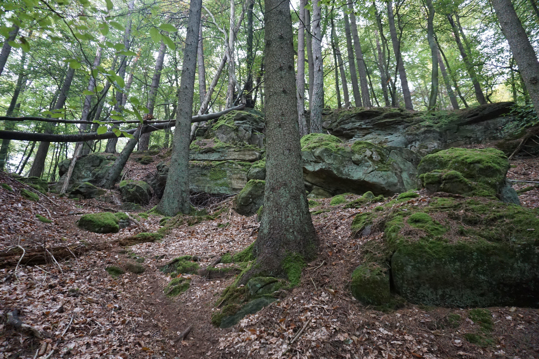 Árvores, caminho e rochas no Trilho de Mullerthal, no Luxemburgo